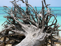 The Fallen Tree Stock Image