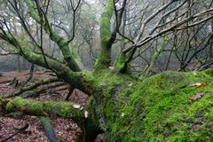 Fallen tree. A fallen tree in woodland Stock Photos