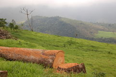 The Fallen tree Stock Images