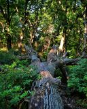 fallen tree Arkivbilder