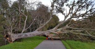 fallen tree Fotografering för Bildbyråer