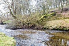 Fallen Tree. A fallen tree across a river royalty free stock photography