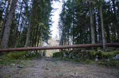 Fallen tree across the road Royalty Free Stock Photography