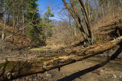 Fallen tree. Stock Image