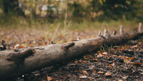 Fallen tree in the autumn forest stock video footage