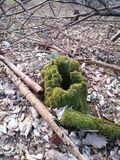 Fallen tree being bathed with moss in the center of the forest Royalty Free Stock Photography
