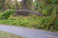 Fallen tree by a bike path. Fallen tree with vines on it by a bike path. Nature. Leaves and grass. Taken in the fall royalty free stock images