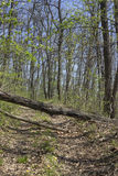 Fallen Tree Blocking The Dirt Road 2 Stock Photos