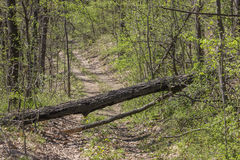 Fallen Tree Blocking The Dirt Road Royalty Free Stock Photography
