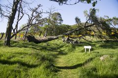 Fallen Tree Across Walking Trail Royalty Free Stock Images