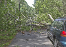 Fallen Tree Blocks Car Stock Photo