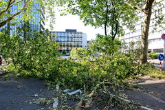 Fallen tree blown over by heavy winds. On June 12, 2014 in Dusseldorf, Germany. Deadly summer storms hit western Germany after a heat wave. High winds, thunder stock photography