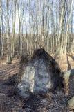 Fallen tree. In The Borzsony, Hungary stock photography