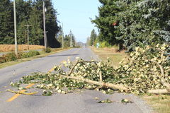 Fallen Tree Branch Blocks Road. A large branch from a tree has blocked a road causing a road hazard royalty free stock image