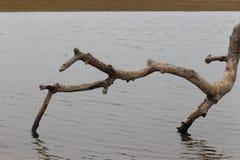 Fallen tree branch Stock Photography