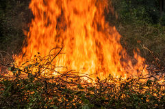 fallen tree is burned to the ground a lot of smoke when vildfire Stock Photography
