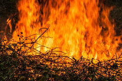 fallen tree is burned to the ground a lot of smoke when vildfire Stock Photos
