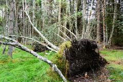 Fallen tree in the Cairngorms National Park Royalty Free Stock Photos