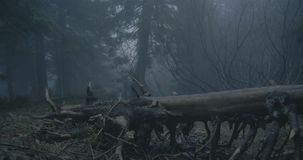 Fallen tree with curvy branches in a dark forest in the Carpathians in slo-mo stock video