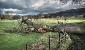 Fallen Tree Damage Royalty Free Stock Images