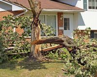 Fallen Tree. Fallen and damaged tree after severe thunderstorm royalty free stock photos