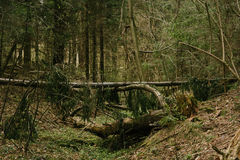 Fallen tree in the deep green dark forest Stock Image