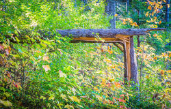 Fallen Tree at 90 Degrees Stock Photography
