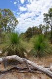Fallen Tree Draped in Bark: Australian Bushland Stock Image