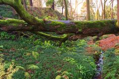 Fallen tree. In the green tropical forest stock photo