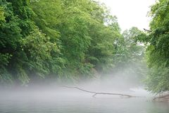 Fallen tree in foggy river. Leafy trees drape over a foggy quiet still river where a tree has fallen over into the water Stock Photos
