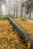 Fallen tree in the forest. Fallen tree in the yellow grass, a fallen tree in the forest, wet fallen tree, autumn forest with fog forest landscape of the Czech stock photography