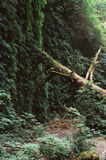 fallen tree in forest Stock Photo