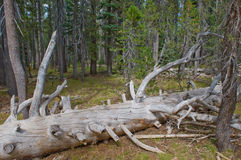 Fallen tree in forest Stock Images