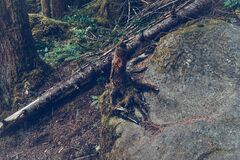 Fallen tree in forest Royalty Free Stock Image