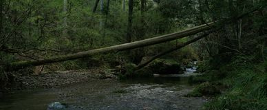 Fallen tree in the forest across the river royalty free stock image