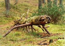 Lying tree in animal pose stock photography