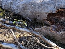 Fallen tree on forest floor stock images
