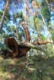 Fallen tree Stock Photography