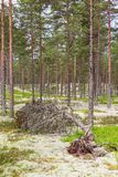 Fallen tree in a forest Stock Photo