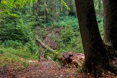 Fallen tree in the forest after rain stock photos