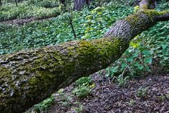 fallen tree in forest stock photography