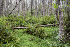 Fallen Tree Stock Photo