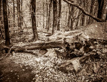 Fallen tree in the forest. Stock Photo