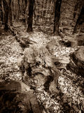 Fallen tree in the forest. Stock Photography