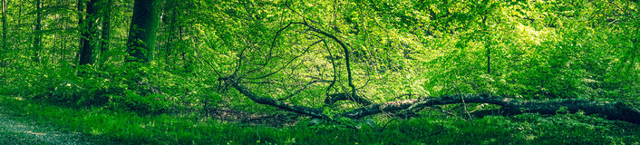 Fallen tree in a green forest Royalty Free Stock Images