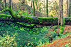 Fallen tree. In the green tropical forest royalty free stock images