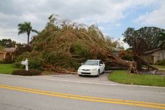 Tree Collapsed Hurricane Irma. A fallen tree has been uprooted and knocked over, covering the entire driveway but leaving the home and car intact, on Meadows Royalty Free Stock Photo