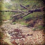 Fallen. A tree has fallen over a creek Stock Photos