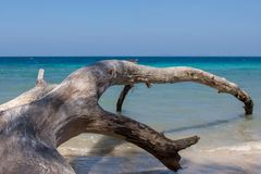 Fallen tree on Havelock Island beach, Andamans. Fallen tree on Havelock Island beach, Andamans, India. Seascape with the big old fallen tree in the water royalty free stock photo
