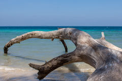 Fallen tree on Havelock Island beach, Andamans. Fallen tree on Havelock Island beach, Andamans, India. Seascape with the big old fallen tree in the water stock image